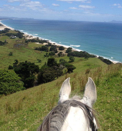 Pakiri Beach Horse Treks, NZ