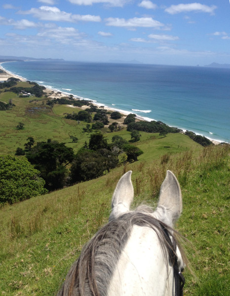 Pakiri Beach Horse Treks